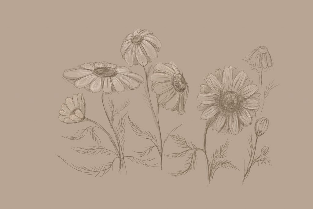 how to draw, how to draw. art lesson, how to draw flowers