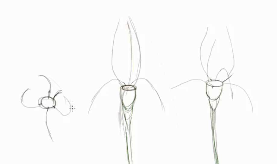 How to draw a flower, art lesson, tutorial step by step