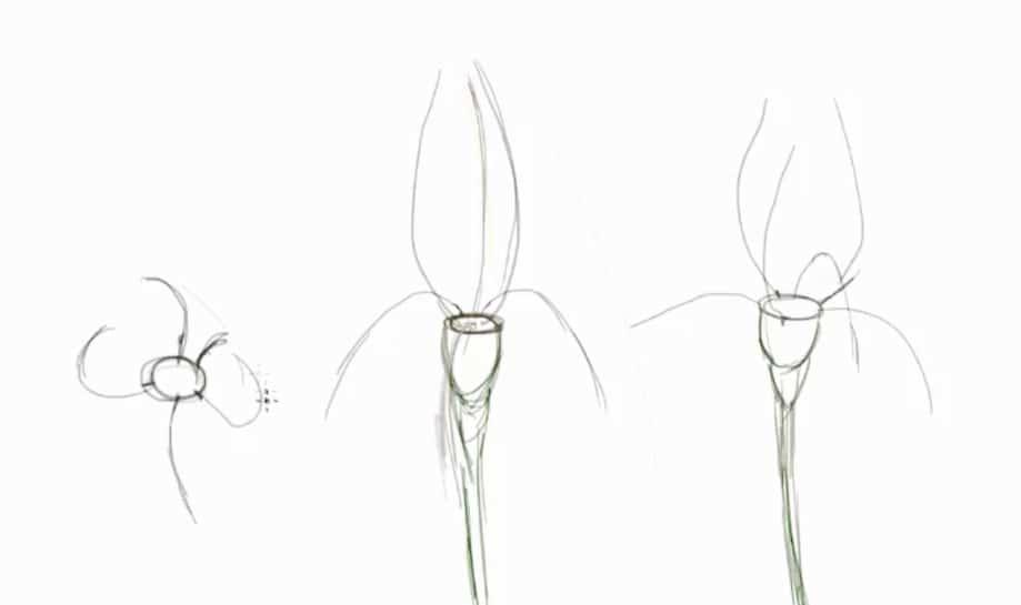 How To Draw Irises