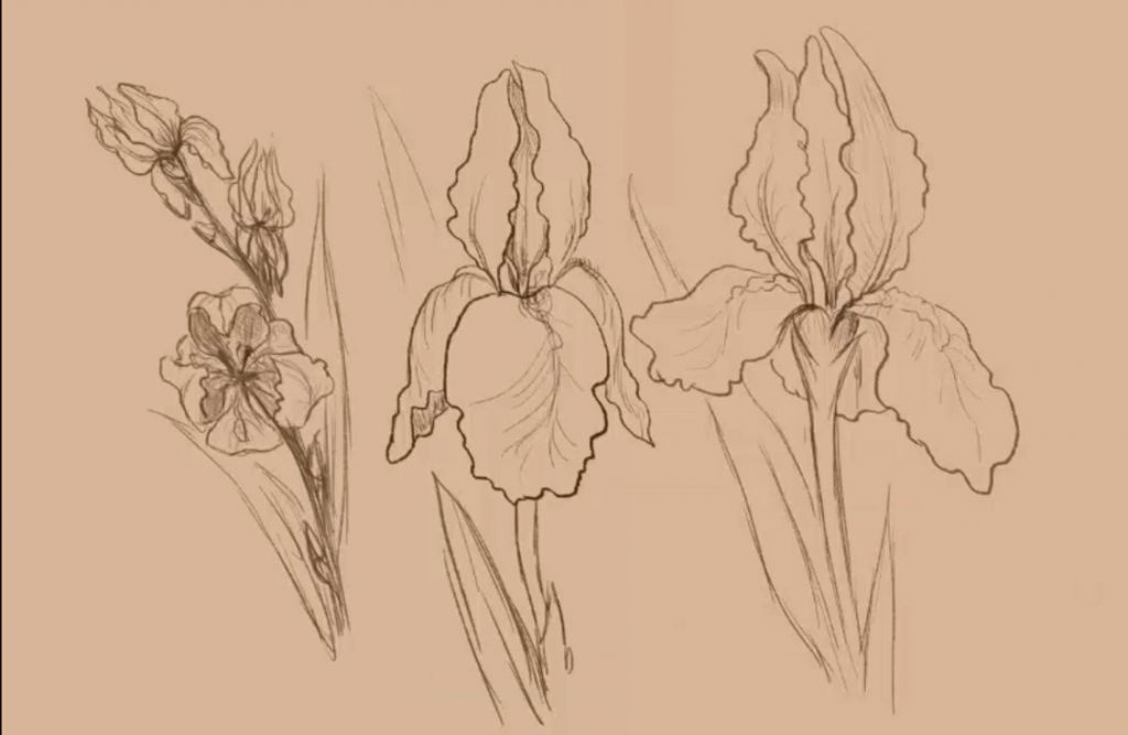 how to draw, how to draw, art lesson, to draw a flower