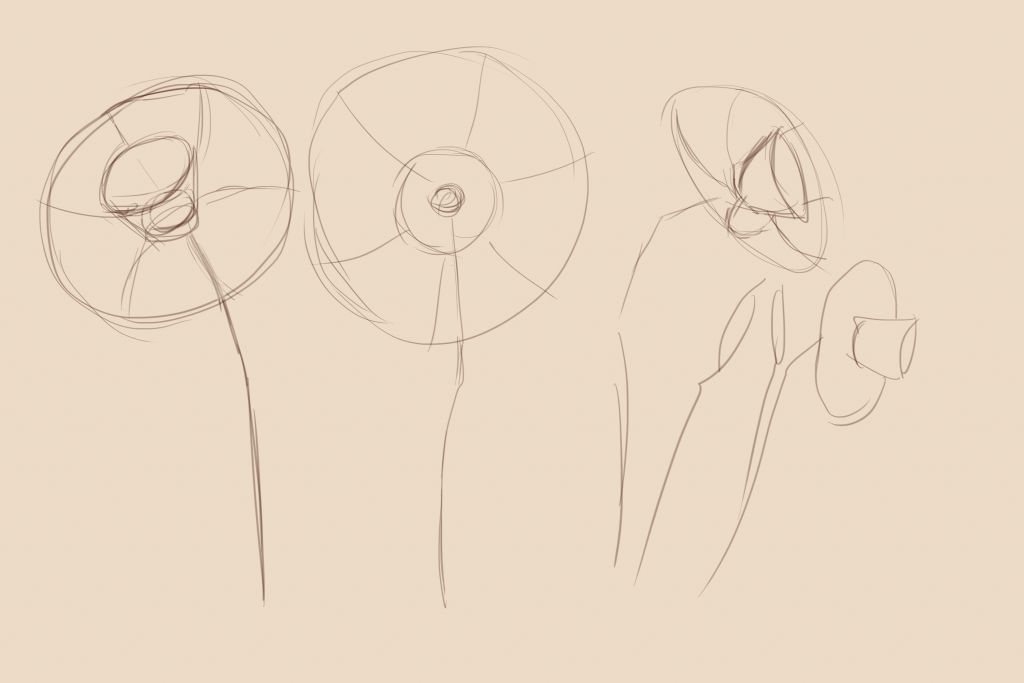 How to draw flowers, art lesson step by step