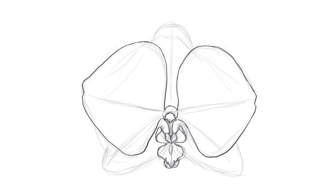Drawing Lines Qml : How to draw a orchid