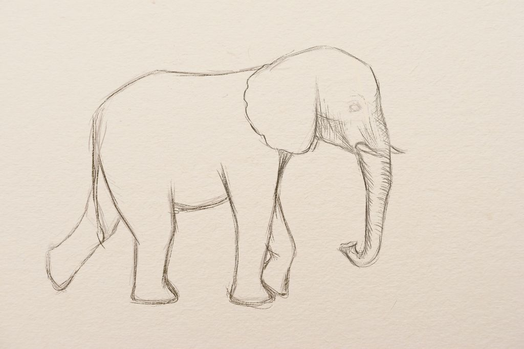 how to draw, art lesson, how to draw elephant, how to paint elephant