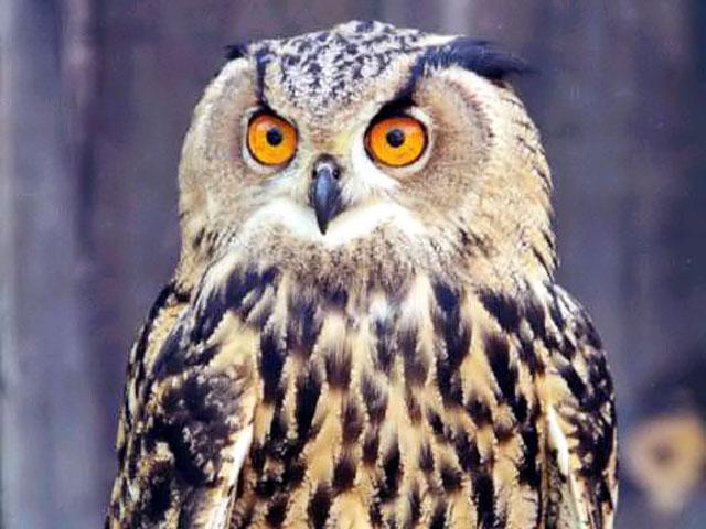 an owl, art lesson