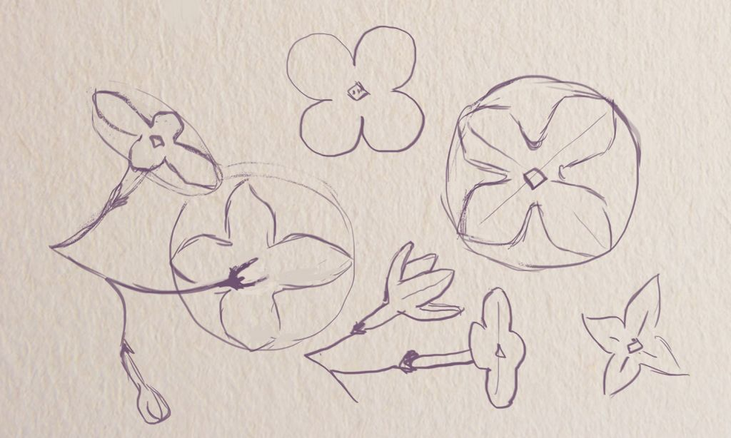 how to draw lilac, how to pint flower