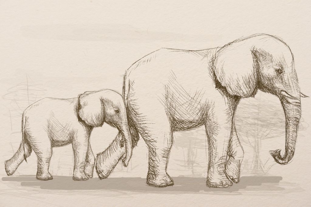 how to draw, art lesson, how to paint elephant, howto draw animals