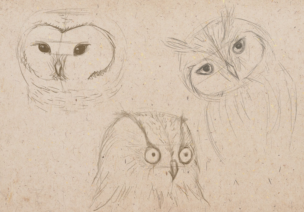 how to draw an owls, how to draw a bird
