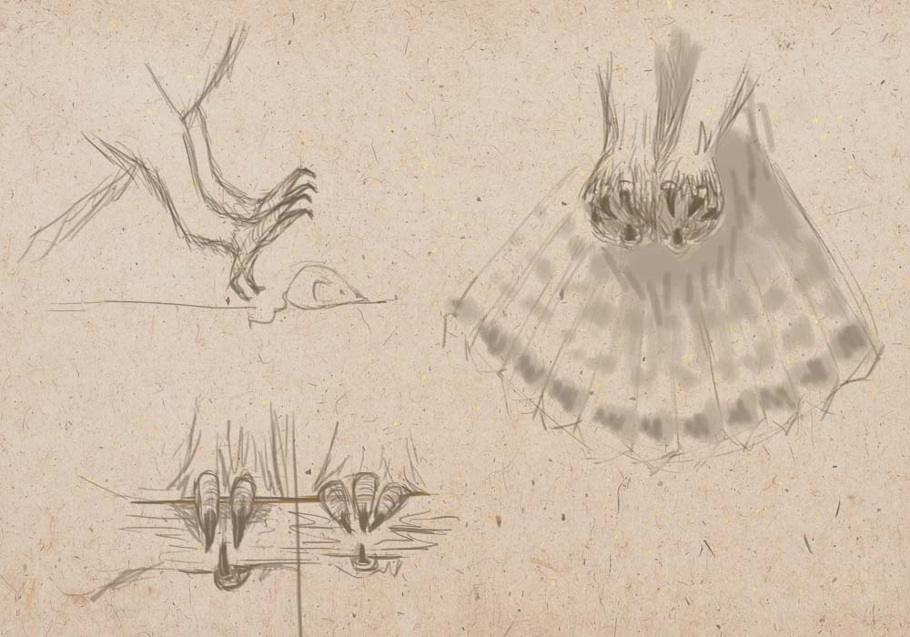 how to draw, art lesson, how to draw a bird, how to draw an owl