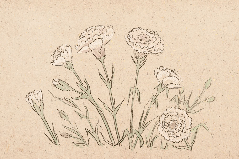 How to draw carnation , art lesson, how to draw, to draw flowers