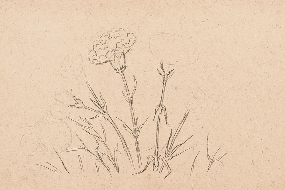how to draw flowers, art lesson, how to draw carnation