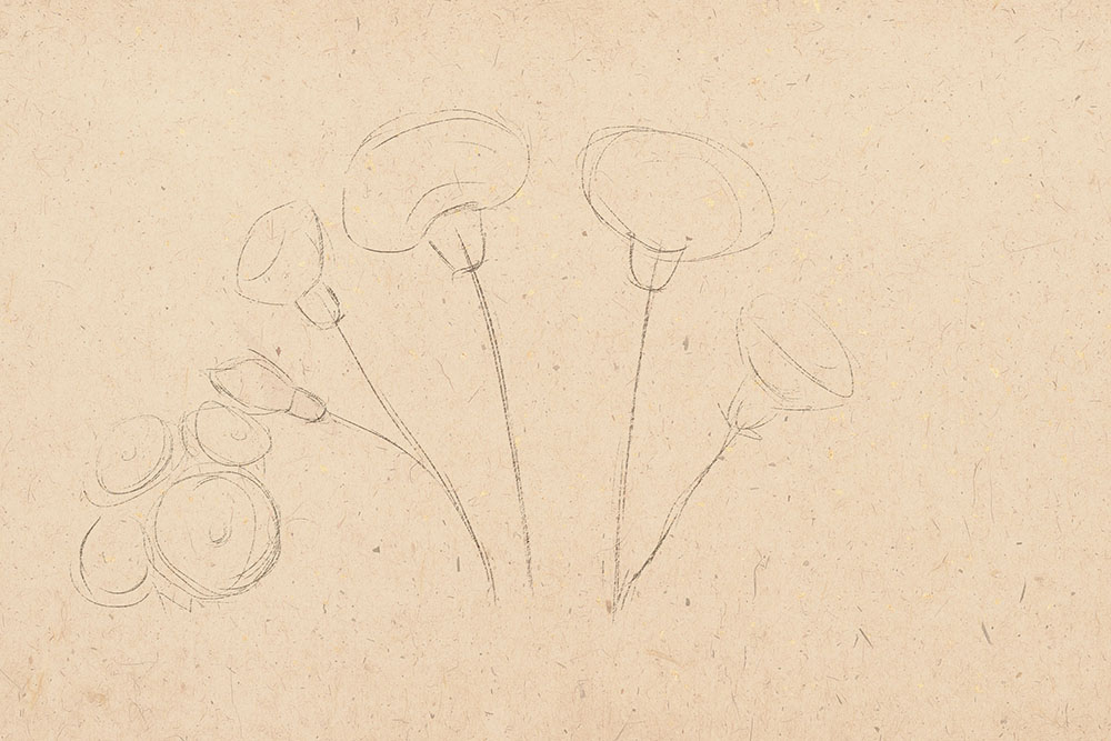 how to draw, how to draw flowers, to draw carnation, draw step by step