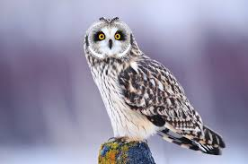 owl, photo of owl