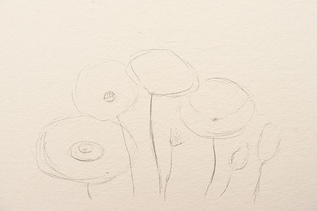how to draw flowers, art lesson, howto draw poppies