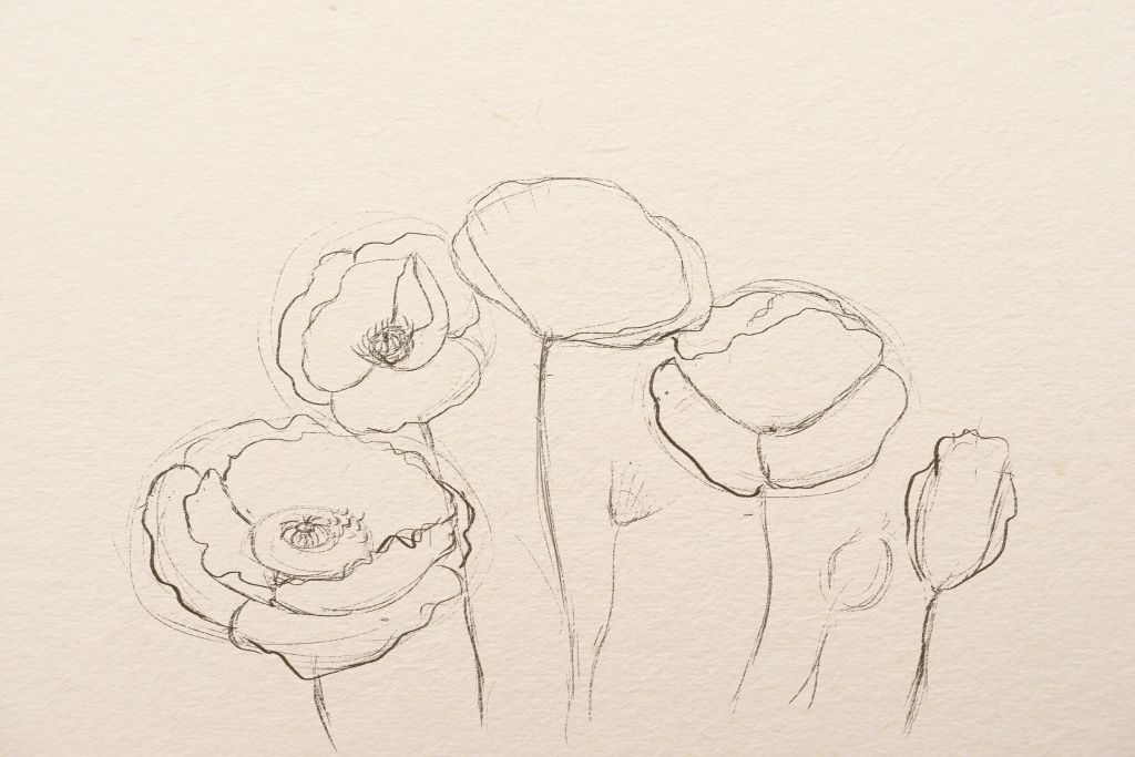how to draw flower, how to draw poppies, art lesson