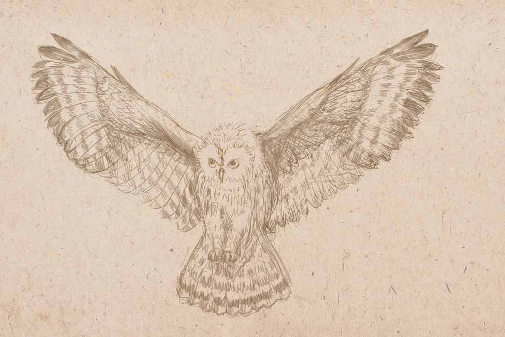 how to draw an owl, art lesson, how to paint a bird