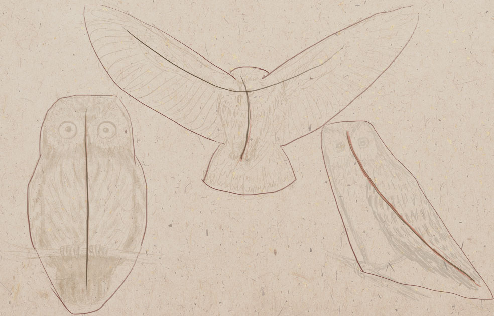 how to draw a bird, how to draw an owl, art lesson