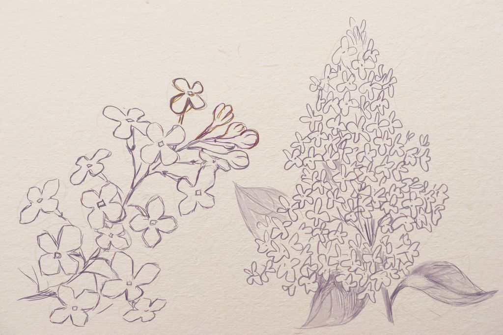 how to draw flowers from different angles