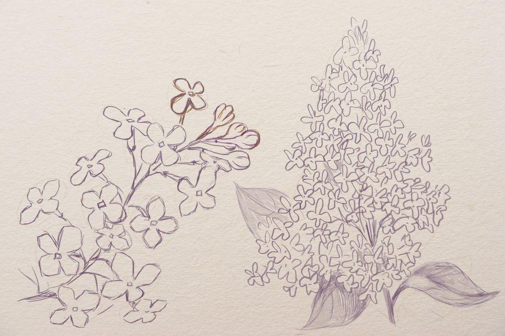 how to draw lilac, how to draw, how to draw flowers