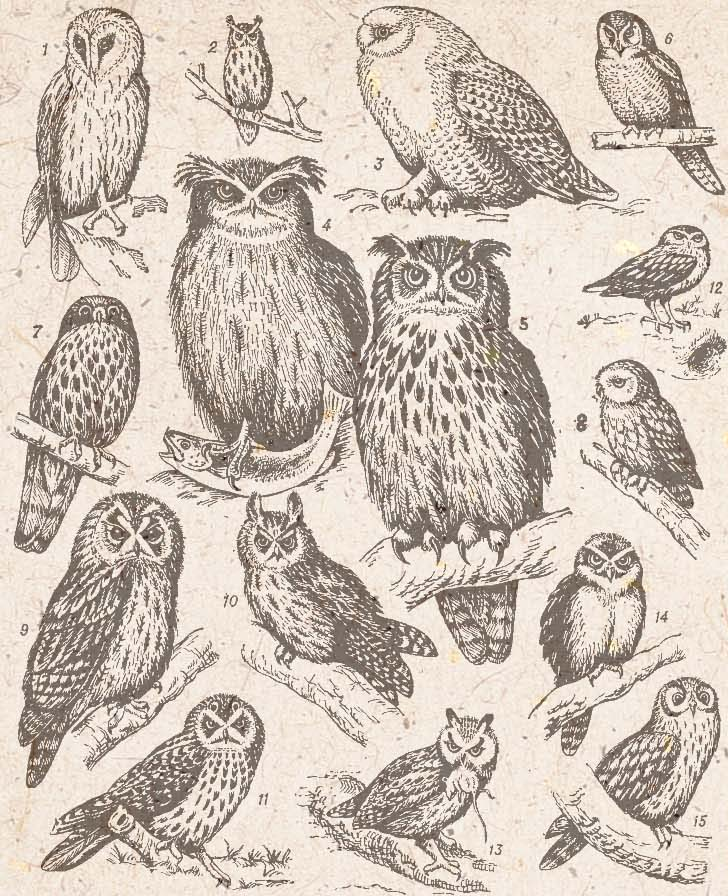How To Draw An Owl Art Lesson Paint
