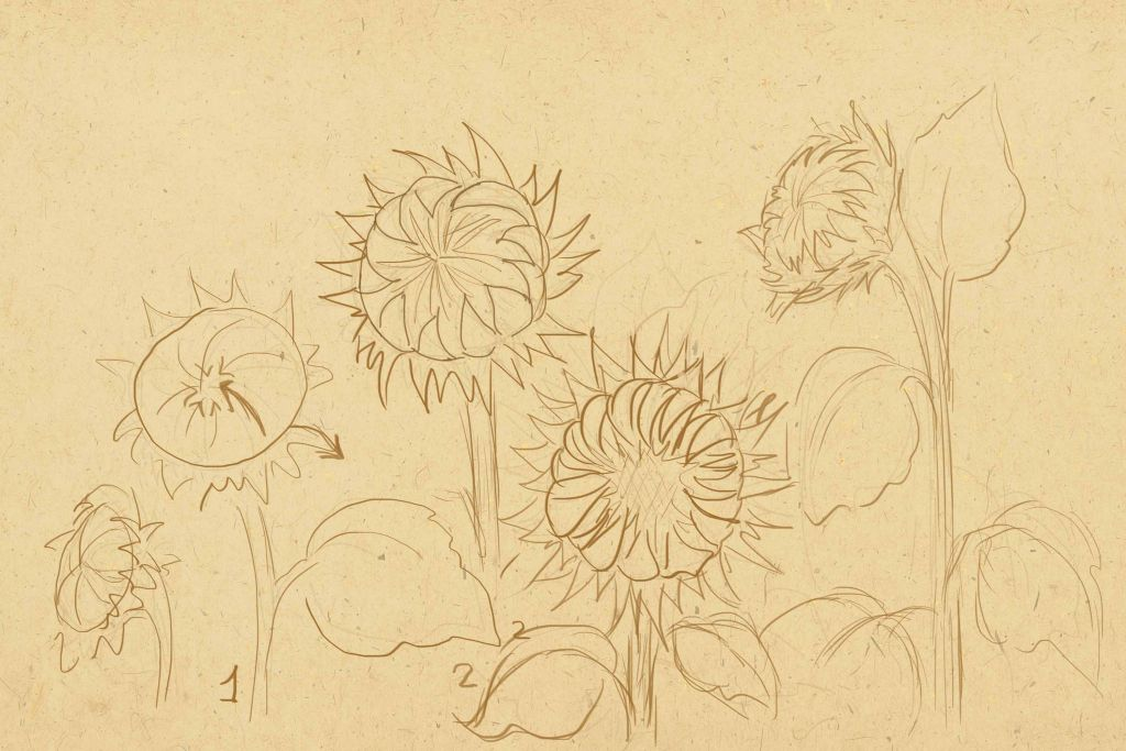 how to draw, art lesson, how  to paint flowers