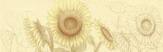 how to draw flower, how to draw sunflower