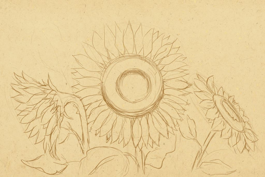 how to draw flowers, art lesson, how to draw sunflowers