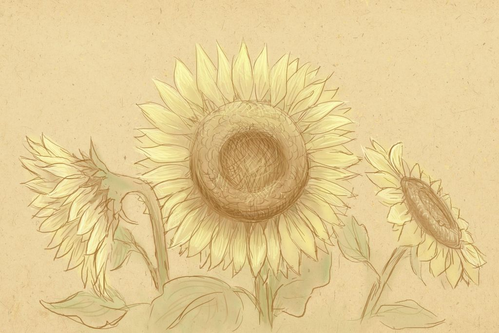 how to draw sunflower, art lesson, how to paint flower
