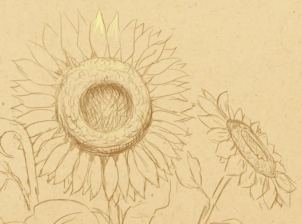 how to draw, art lesson, how to draw sunflowers