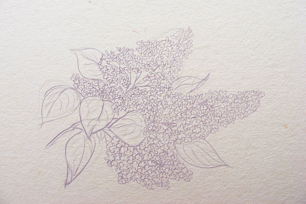how to draw lilac, how to draw flowers, art lesson