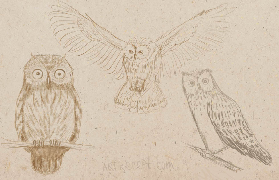 how to draw an owl, art lesson, how to draw birds