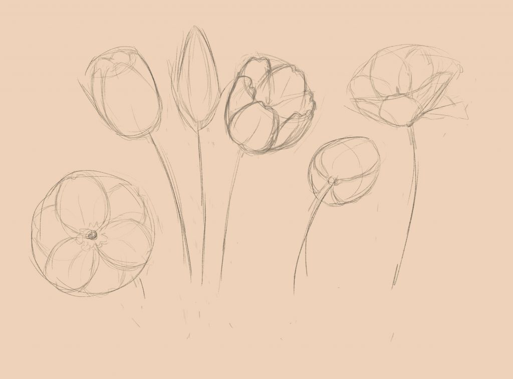 How to draw flowers, how to draw, art lesson, art lesson step by step