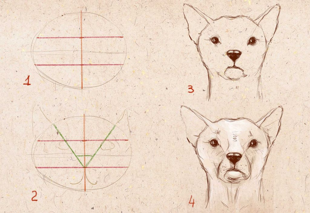how to draw portrait of dog, how to draw a dog, to draw a dog step by step in pencil