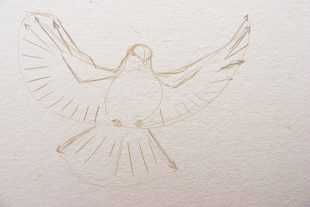 how to draw a bird, how to paint a dove, art lesson