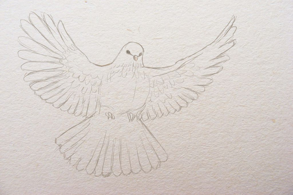 how to draw a bird, how to paint a dove, art lesson step by step