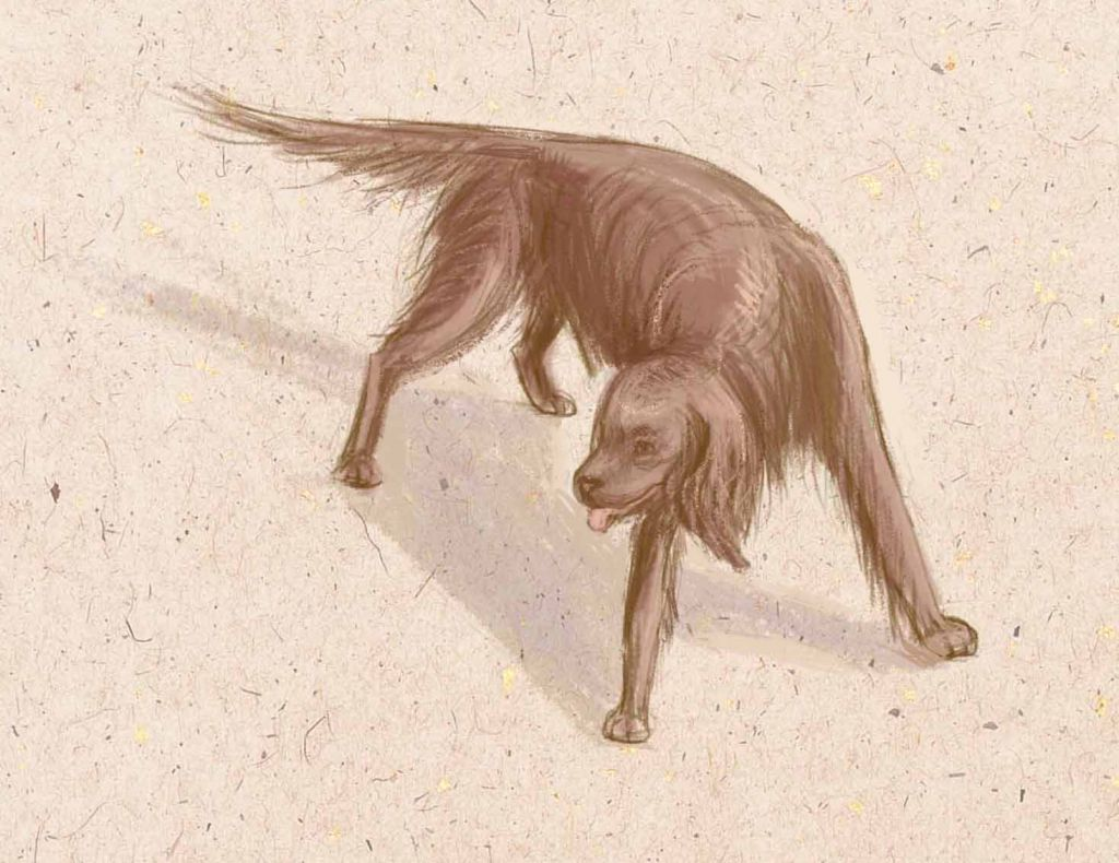 how to draw a dog, how to draw step by step, to draw a dog with pencil