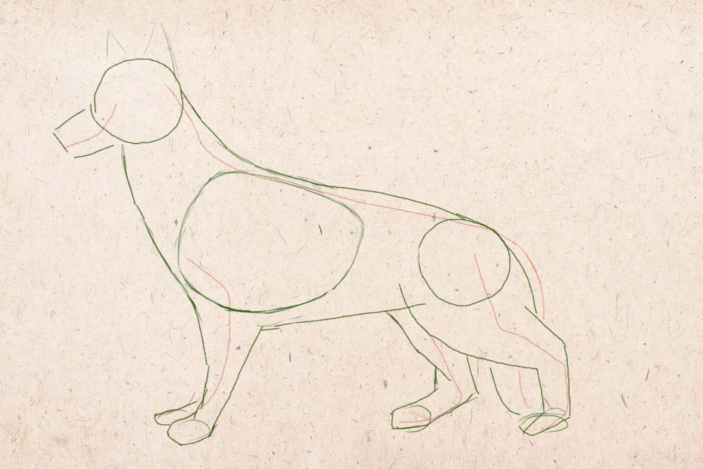 how to draw a dog, how to draw a dog step by step, to draw a dog in pencil