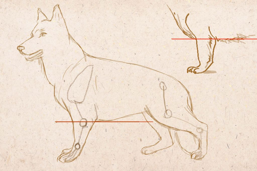how to draw a dog, how to draw draw animal step by step, to draw dog in pencil