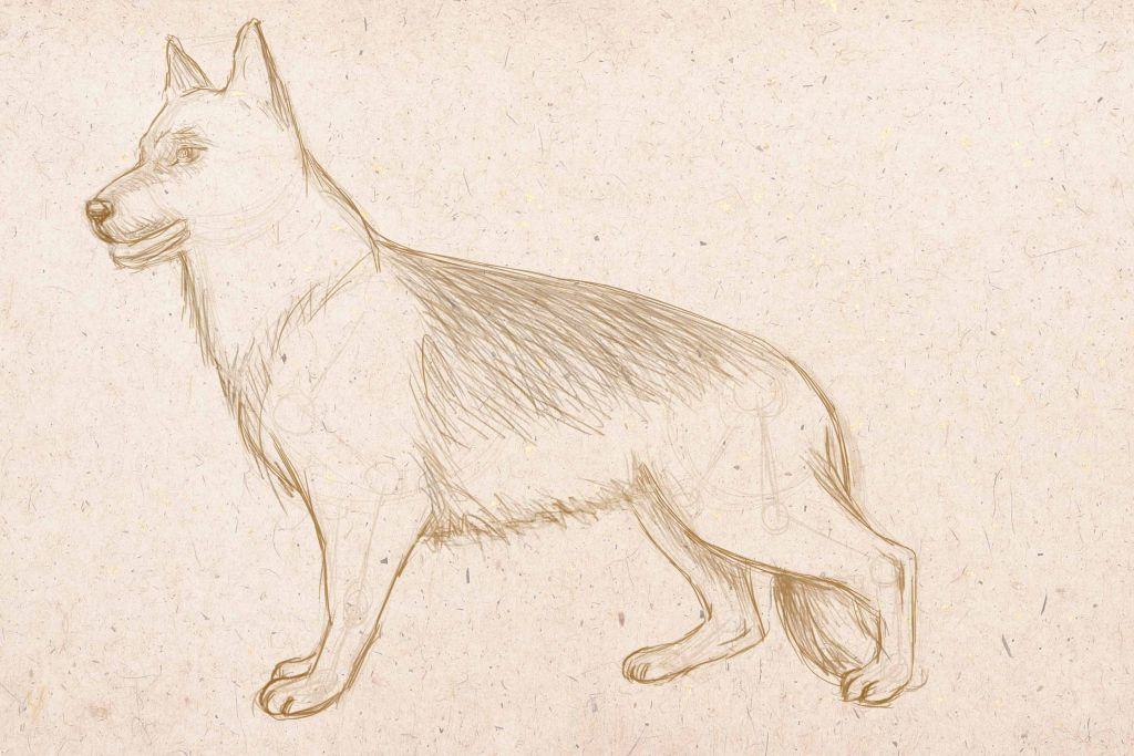 how to draw a dog, to draw a dog with pencil, to draw step by step