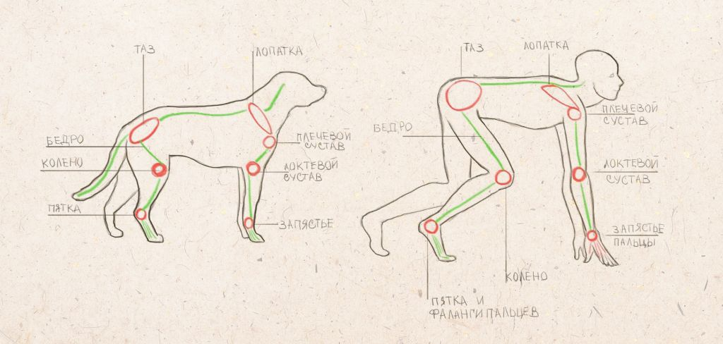 how to draw a dog, how to draw an animal, howto draw step by step