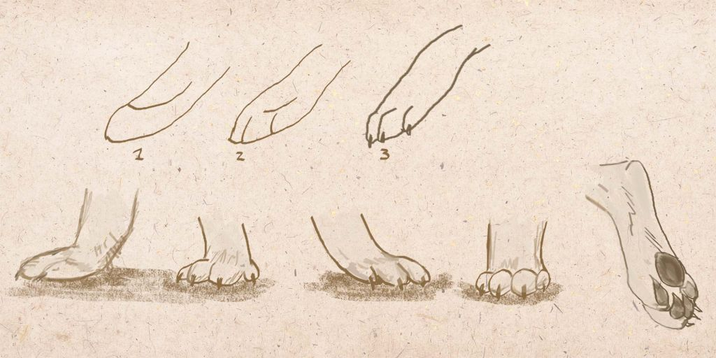 how to draw a dog, how to draw step by step