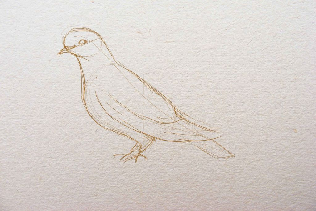 how to draw a bird,how to draw a dove, art lesson