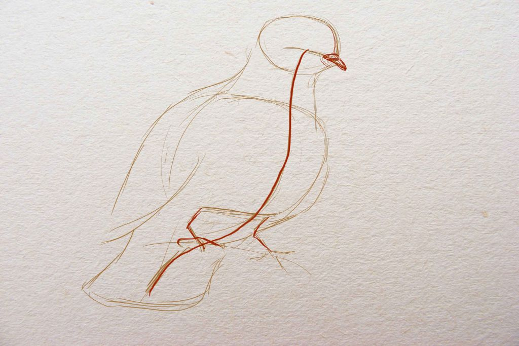 how to draw a bird, how to draw a dove