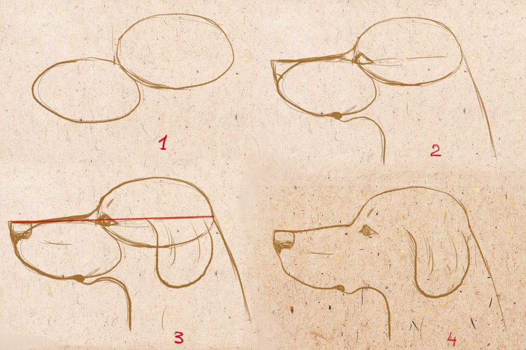 how to draw portrait of dog, how to draw dog step by step