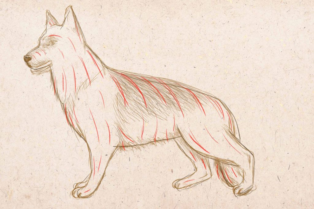how to draw a dog, to draw a dog step by step