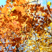 How to paint an autumn landscape with the oil paints «The autumn gold»